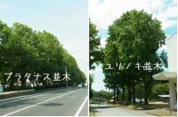 ファイル 1202-2.jpg