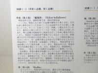 ファイル 2013-5.jpg