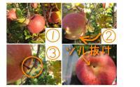 ファイル 2109-2.jpg