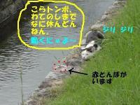 ファイル 2846-2.jpg