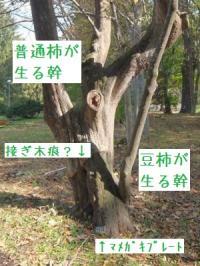 ファイル 3105-5.jpg