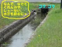 ファイル 415-3.jpg