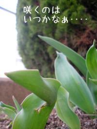 ファイル 611-5.jpg